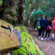 experiencia-naturaleza-ruta-senderismo-tenerife-laura-4